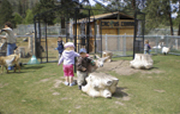 Kids at Wildlife Park